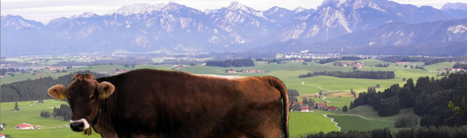 Httenurlaub in Bayern - Familien und Gruppen Ferienhütten