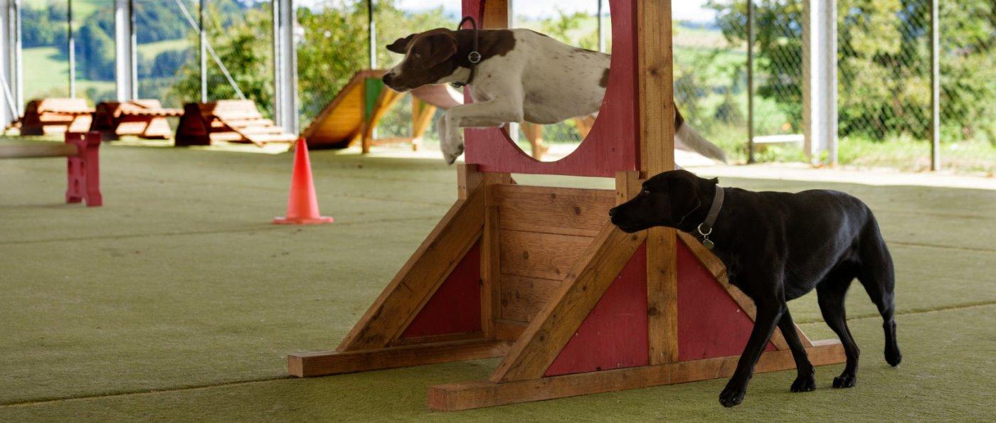 feuerschwendt-familienhotel-bayern-hundehotel-hundetraining