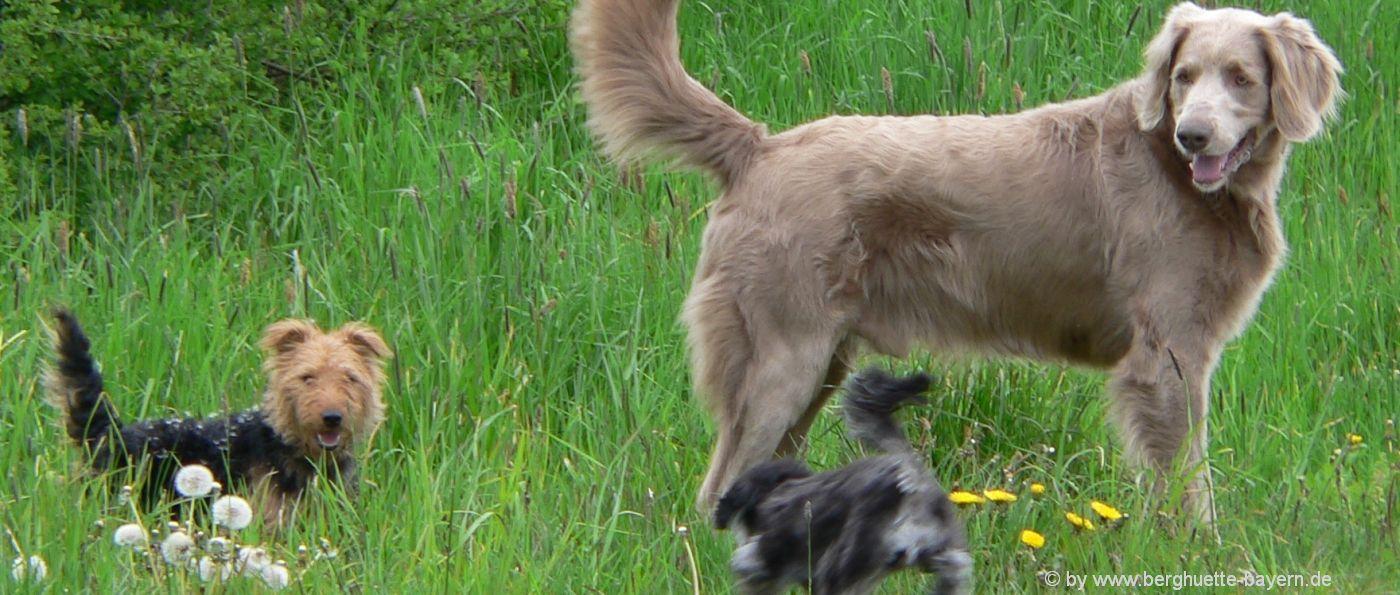 gruppenurlaub-mit-hund-in-bayern-hütten-mieten