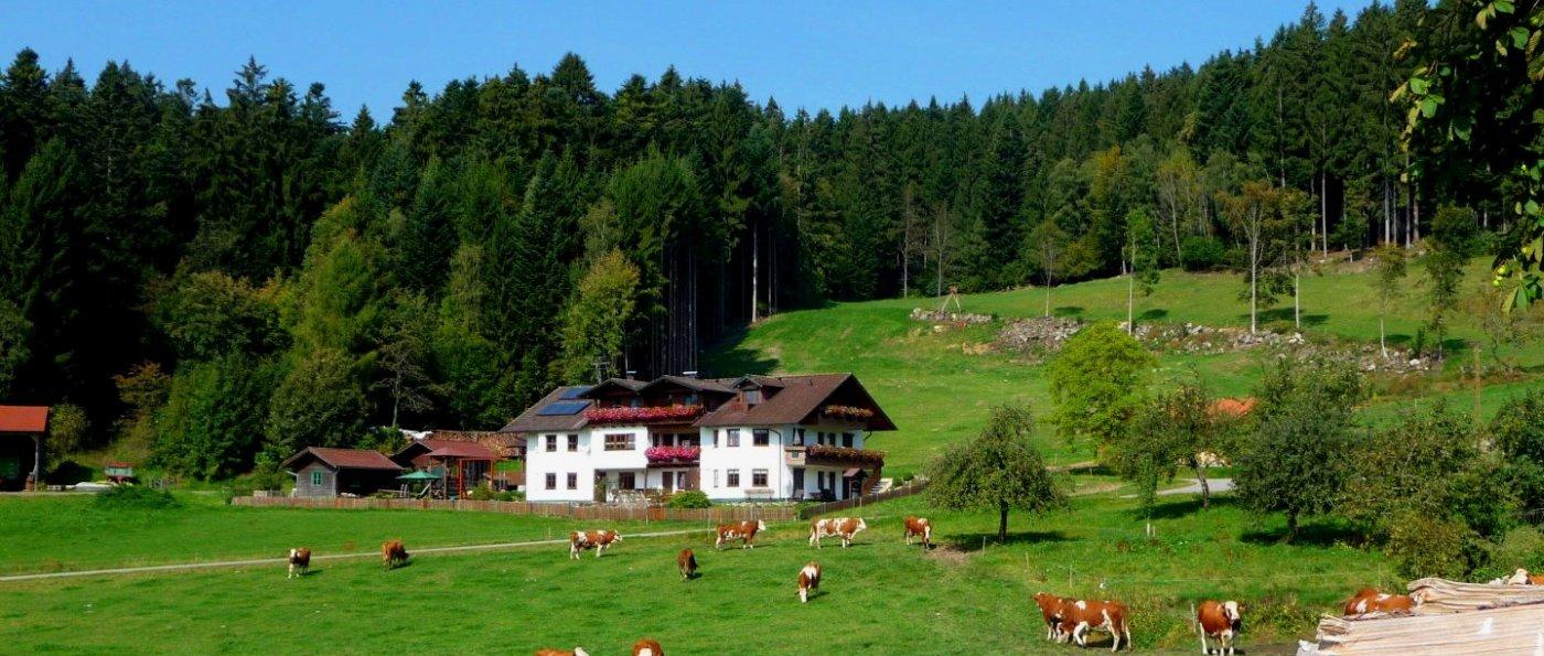 hacker-patersdorf-bergpension-bayerischer-wald-familienpension