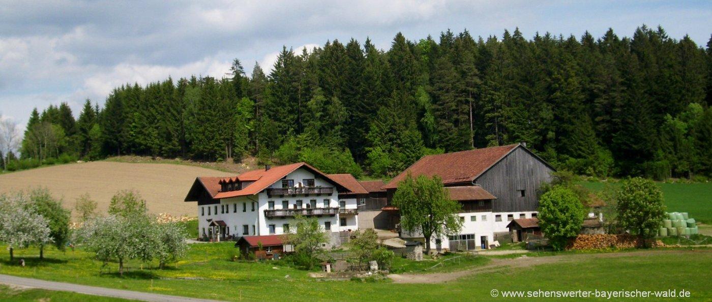 Bauernhof mit Halbpension in Bayern Hackerhof in Patersdorf