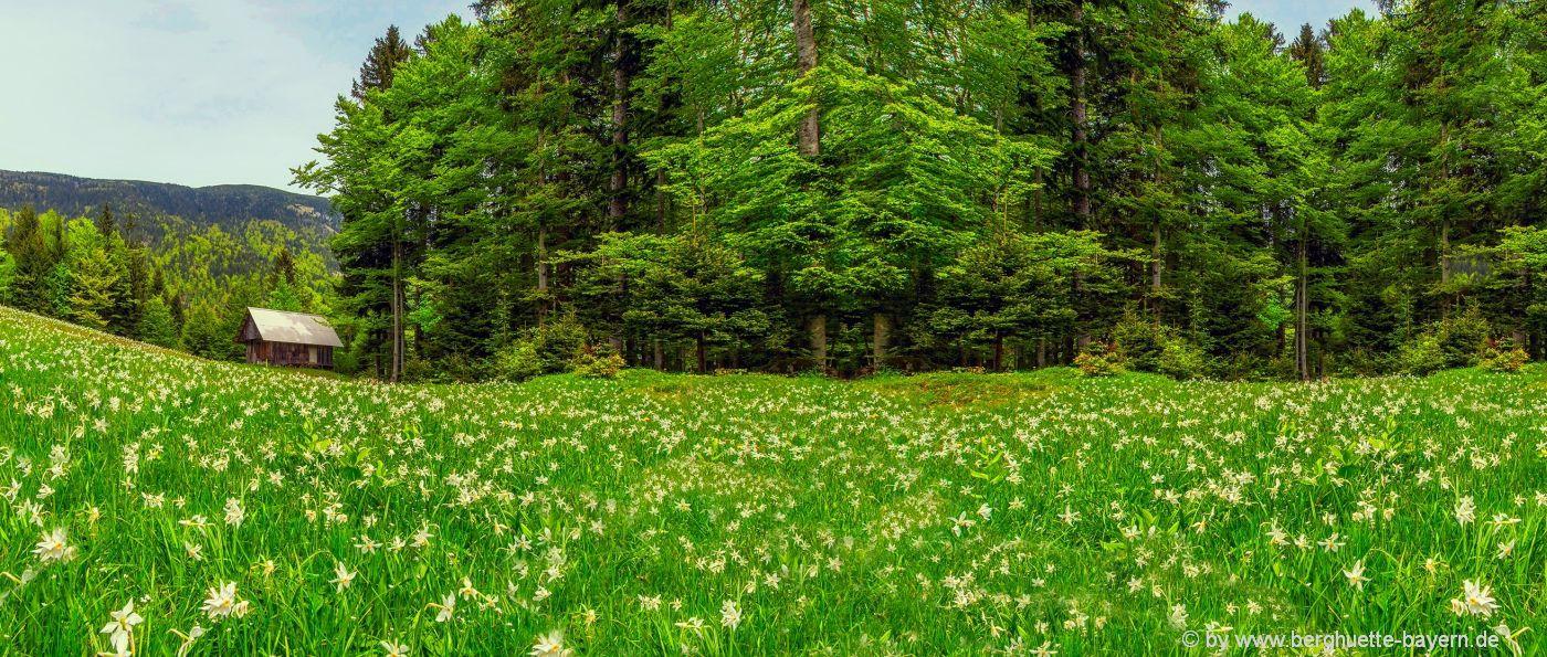 hüttenurlaub-bayern-abgelegene-einsame-berghütten-mieten-deutschland