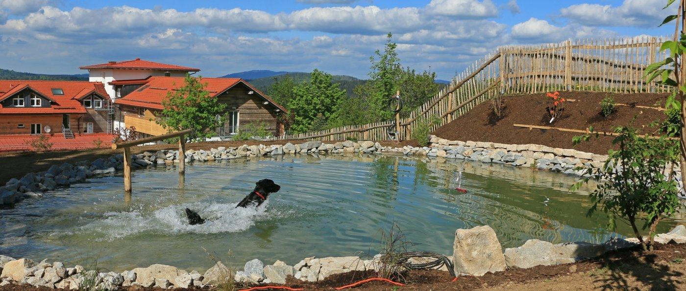 Hundehotel in Bayern mit Pool für die Hunde