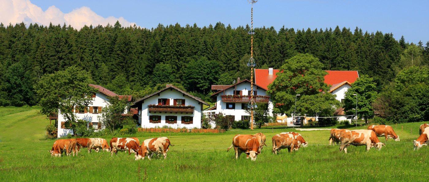 wieshof-bayerischer-wald-bauernhof-urlaub-deutschland