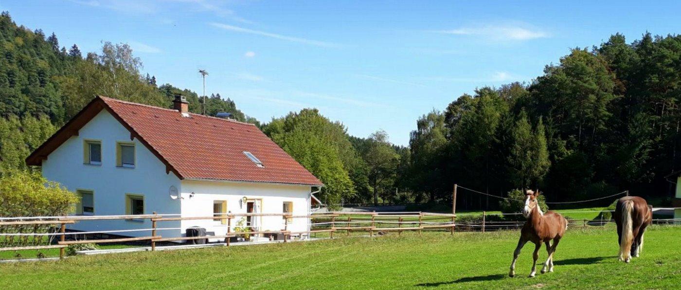 zankl-sofia-ferienhaus-6-personen-reiterhof-bayern-ponyreiten